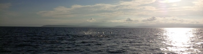 Dolphins off Devon
